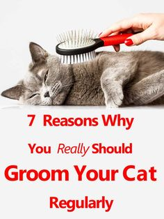 Cats are famous for their self-grooming rituals. Cats use their paws to reach those places they...
