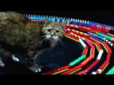 This is Absolutely, Positively the Best Way to Hypnotize Your Cat video