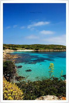 - Asinara - Sardinia -Cerdeña