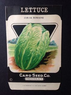 1930s Litho Antique Vintage Seed Packet Lettuce Cos Romaine Card Seed Co. Pack #CardSeedCo