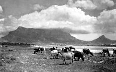 Cape Town in the Old Days! - Cape Town is Awesome Big Bay, Cape Town South Africa, The Old Days, Most Beautiful Cities, Historical Pictures, Belleza Natural, African History, Africa Travel, Vintage Photographs