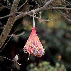 Fill an onion bag with nesting materials, such as raffia, nonmetallic ribbon, small sticks, and pet hair. Hang from a tree, then eagerly watch for the birds to begin construction.