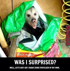 This Opossum Got crazy!!!  for more funny pictures visit wwww.funnypics.in