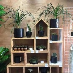 Inspiração para você que quer um cantinho verde na sua casa 😘😘 confira mais dicas e inspirações em nosso blog www.studio1202.com.br