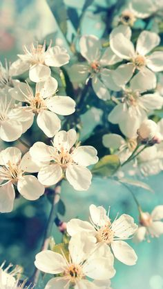 White flower close up wallpaper