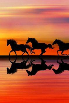 Silhouette of horses