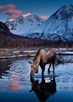 How amazing is Alaska? Pretty amazing.