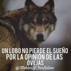 Motivational Phrases, Inspirational Quotes, Mentor Of The Billion, Quotes To Live By, Life Quotes, Wolf Quotes, Word Of The Day, Spanish Quotes, Love Words