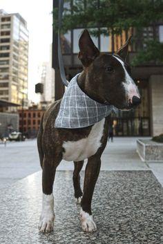 Marco Plaid Dog Bandana New Twilight, Velvet Bow Tie, Knit Dog Sweater, Waterproof Coat, Dog Hoodie, Dog Bandana, Dog Accessories, Your Best Friend, Dog Bed