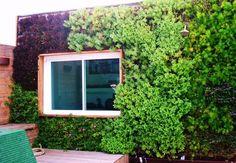 Mais do que apenas embelezar, jardins verticais são eco-eficientes; veja