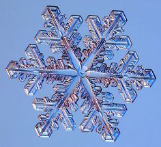 starfish in the middle : Photographs of real snowflakes reveal an even more amazing variety than you might have expected.