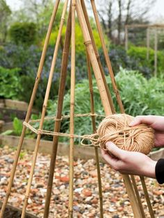 Runner beans grow best in rich, fertile soil, so prepare your site by digging in plenty of organic matter at least two weeks before planting. Plant scented flowers, such as sweet peas, nearby to attract pollinating insects to the garden.