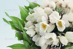 #bouquetgennaio   #matrimonio   #matrimoniopartystyle   #sposa2016  #wedding #weddingconsultant #trovalocation   #location   #nozze  #elleboro