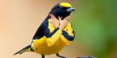 Pájaros con brazos humanos, la moda en Internet (FOTOS)