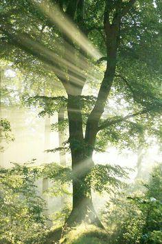 Sunlight... beautiful...