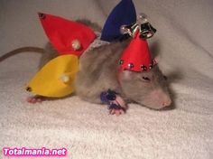 Poor Ratty, I hope the rest of the mischief  doesn't laugh at him. His owner better sleep with one eye open...teehee
