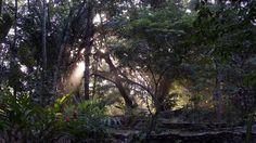 osarainforestrentalsEarly morning at Casa Tonka, Playa Sombrero, Osa Peninsula, Costa Rica.