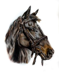 """104 Likes, 4 Comments - Steph Burch Art - Rural Artist (@stephburchart) on Instagram: """"Despite being one of my favourite subjects to draw, horses aren't something I'm commissioned to do…"""""""