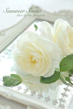 『バラに癒される季節』