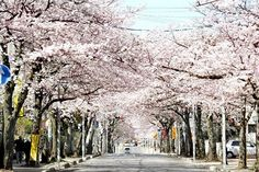 Top 5 Places to Visit in Noda, the Most Underrated City in Chiba
