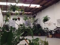 thepaperbeast:  Loose Leaf - Collingwood, Melbourne. toughstrips and I seized the day with early coffees and plant adventures. Can't rave enough about this place.