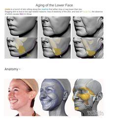 Facial Anatomy, Head Anatomy, Human Body Anatomy, Anatomy Sketches, Anatomy Drawing, Anatomy Art, Human Face Sketch, Human Drawing, Drawing Body Proportions