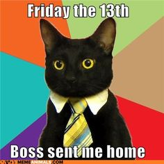 Texas Means Business Cat - hires Business Cat as nation's first ever feline-in-residence. I don't think there are any other business schools in the country with a feline-in-residence. Lol So True, Business Cat Meme, Crazy Cat Lady, Crazy Cats, Cat Memes, Funny Memes, Funny Captions, It's Funny, Funny Quotes