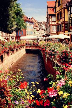 Flowers in Europe