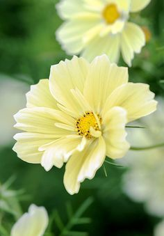 10 of the best new plants and seed varieties for 2016