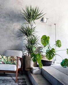 Vasos com folhagens e flores ficam ótimos com o fundo de cimento queimado e trazem vida para os cantinhos! . Vamos reformar? . #conectarq #arquitetura #decor #architecture #interiores