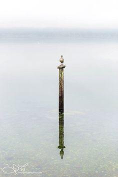 DaniPress Photography simplicity