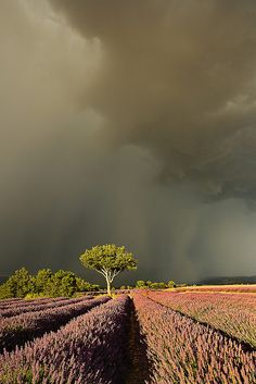 Patricia Thomas On the Edge of the Storm We had such great light during sunset over the lavender fields in Provence. From storms to rainbows then hot pink skies Beautiful World, Beautiful Places, Beautiful Pictures, Foto Picture, Landscape Photography, Nature Photography, Fuerza Natural, Wild Weather, Lavender Fields