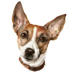 #dogdrawing #dogportrait #dogpainting #canineartist