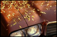 buick autumn - Google Search