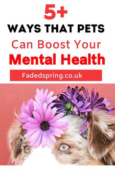 Having pets can have a positive impact on your mental health. Something as simple as petting an animal for a short period can boost your mood and sense of well-being! From improving depression, anxiety and other mental health issues to making you feel happier, here are 5 reasons why pets can boost your mental and physical health.