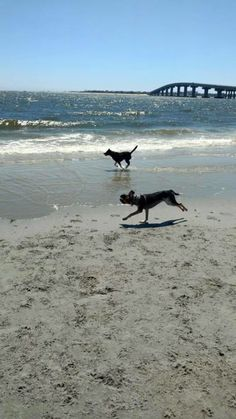 Bring your furry friends to visit brohard paw park on venice beach 25 of the best dog friendly beaches across america solutioingenieria Gallery