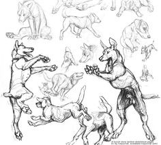 Sketchbook Pages par screwbald. sur - Anthros and animals - Chien Animal Sketches, Animal Drawings, Drawing Sketches, Drawing Tips, Animation Reference, Art Reference Poses, Comics Und Cartoons, Dog Anatomy, Wolf Sketch