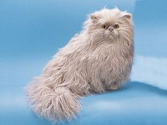 Persian Cat Sitting Down Collectible Figurine Kitten Statue Decoration
