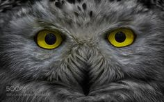 Eyes by elninjo #animals #animal #pet #pets #animales #animallovers #photooftheday #amazing #picoftheday