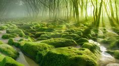 Günün Fotoğrafı / Picture Of The Day  #PictureOfTheDay #GününFotoğrafı #Wallpaper #Photo #HDResim #Forest #Moss #Tree #Sun #Lake #Rock #Nature #Orman #Yosun #Ağaç #Taş #Güneş