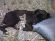 The bestest of friends...