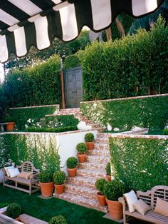 Potted plants and vines on walls.