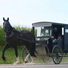 Modern Amish buggy