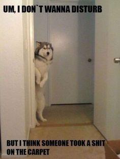 #funny #lol #dog