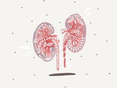 Great work from a designer in the Dribbble community; your best resource to discover and connect with designers worldwide. Kidney Anatomy, Survivor Tattoo, Nurse Art, Medical Art, Anatomy Art, Wallpaper Pc, Science Art, Cute Illustration, Painting Inspiration