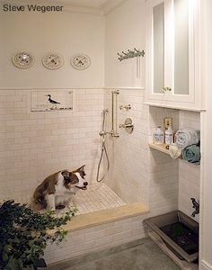 Great idea for a mudroom / dog room? (I knew this would be great.they have the best kind of dog modeling in the shower! Dog Room Design, Interior Design Living Room, House Design, Dog Washing Station, Animal Room, Dog Rooms, Dog Shower, Dog Houses, Kitchen And Bath