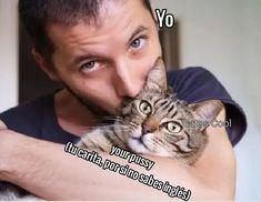 "Gatos Cool en Instagram: "". . . . #memesdegatoscool #gatoscool😸 #gatos_cool #gato #gatos #gatosdeldia #cats #cat #kitten #kitty #gatosenamorados #enamorados…"""