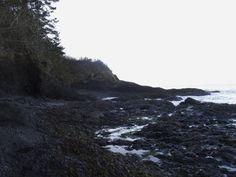 Low tide in WA