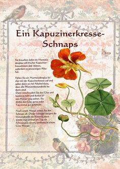 Ein Kapuzinerkresseschnaps - Another! Homemade Wine, Homemade Gifts, Cocktail Drinks, Cocktails, Plant Illustration, Medicinal Herbs, Herbal Medicine, Natural Healing, Home Remedies