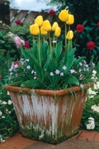 1000 images about layering bulbs in containers on pinterest planting bulbs bulbs and spring - Lasagna gardening in containers ...